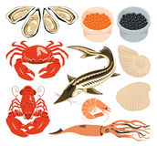 Set marine animals. Set of various marine animals and fish for seafood Royalty Free Stock Photo