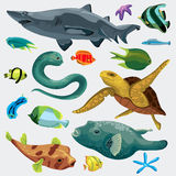 Set of  the marine fihs. Animal fish set with puffer, fish, shark, turtle, mooray eel, nudibranchs, star Royalty Free Stock Images