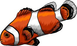 Clouw marine tropical fish. Vector illustration. white background. Angelfish. Set of marine tropical fish. Vector illustration. Watercolor background. Angelfish royalty free illustration