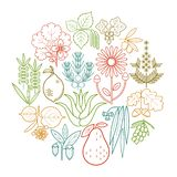 Medical herbs icons vector illustration