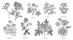Set of medical herbs and plants. royalty free illustration
