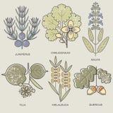 Set of medical plants. Royalty Free Stock Image