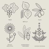 Set of medical plants. Set of vector illustrations of various herbs. Icons of plants to create posters, logos, labels. Healthy lifestyle concept. The herb sage Stock Image