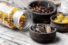 Set of medicinal herbs Royalty Free Stock Image