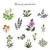 Set of medicinal plants Stock Photos