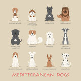 Set of mediterranean dogs Stock Photography