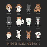 Set of mediterranean dogs Stock Photo