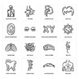 Set of Men Back, Big Moustache, Tooth and Gums, Muscle Fiber, Human Ribs, Masculine Chromosomes, Fingerprint, Spleen, Digestive Sy. Set Of 16 simple  icons such Stock Photo