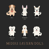 Set of middle eastern dogs Stock Images