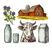 Set Milk farm. Cow head, clover, box carton package, glass and bottle. Vector engraving vintage color illustration. Isolated on white background Stock Photos
