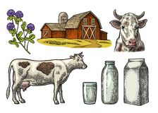 Set Milk farm. Cow head, clover, box carton package, glass and bottle. Stock Photography