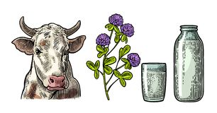 Set Milk farm. Cow head, clover, glass and bottle. Royalty Free Stock Image