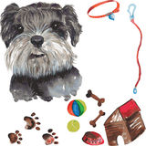Set - miniature schnauzer dog portrait , as well as accessories Royalty Free Stock Photos