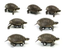 Set of mobile turtle Stock Photography