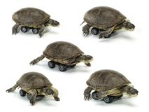 Set of mobile turtle Royalty Free Stock Photo