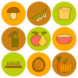 Set of modern icons in hand drawn style on vegan Stock Photography