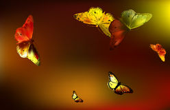 Set Monarch Butterfly with open wings Stock Image