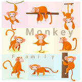 Set of Monkey family Royalty Free Stock Photo