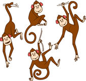 Set of monkeys in different poses Royalty Free Stock Photography