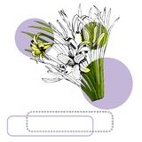Set with monochrome and colored sketch of hemerocallis flowers bouquets, circles and frames. Hand drawn ink and colored sketch. Isolated on white background vector illustration