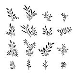 Set of monochrome plant elements. Bouquets, kits Stock Image