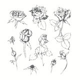 Set of monochrome roses  isolated on white background. Hand draw Royalty Free Stock Photos