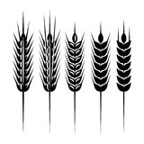 Set of monochrome vector spikelets for scenery Royalty Free Stock Photography