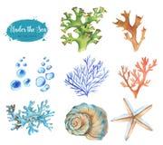 Set morscy przedmioty Fotografia Royalty Free