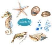 Set morscy przedmioty Obrazy Royalty Free