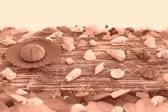 Set morze łuska na starym drewnianym tle Fotografia Royalty Free