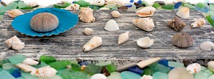 Set morze łuska na starym drewnianym tle Obraz Royalty Free