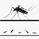 Set of mosquitoes. Mosquitoes in different positions of sucking blood Stock Image