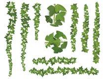 Set muśnięcie bluszcza winogradu gałąź ilustracja wektor