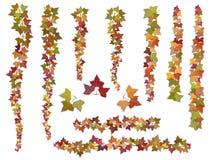 Set muśnięcie jesieni bluszcza winogradu gałąź ilustracji