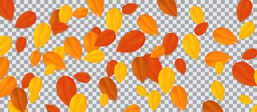 Set of multi-colored autumn leaves on transparent background. Vector Illustration. Royalty Free Stock Image