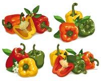 Set of multi colored pepper stock illustration