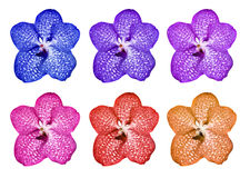 The set of multi-colored orchids Royalty Free Stock Photography