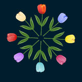 Set of multi-colored tulips. Vector illustration Stock Photos