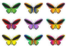Set of multicolored butterflies on a white background, a collection of butterflies. Vector illustration Stock Photos