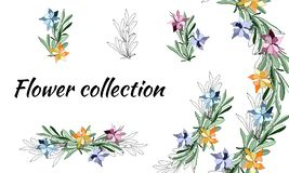 Set of multicolored and contour spring flowers. Vector floral brushes. For decoration, paper, cards, greetings. Vector. Illustration vector illustration