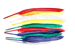 Set of multicolored feathers. Multi-colored feathers on a white background royalty free stock photos