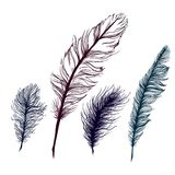 Set of multicolored feathers. On white background Stock Photography