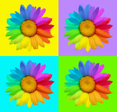 Set of multicolored flowers Royalty Free Stock Photos