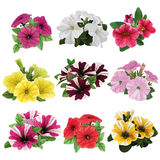 Set of multicolored petunias Royalty Free Stock Image