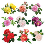 Set of multicolored roses Royalty Free Stock Photography