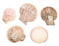 Set of multiple sea shells isolated Royalty Free Stock Photography