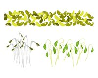 Set of Mung Beans and Sprouts on White Background Stock Photos