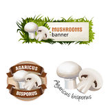Set of mushroom vector banner, badge, sticker, icon with champignon Stock Photos