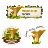 Set of mushroom vector banner, badge, sticker, icon with chanterelles Royalty Free Stock Images