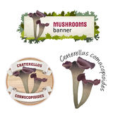 Set of mushroom vector banner, badge, sticker, icon with craterellus cornucopioides Royalty Free Stock Images